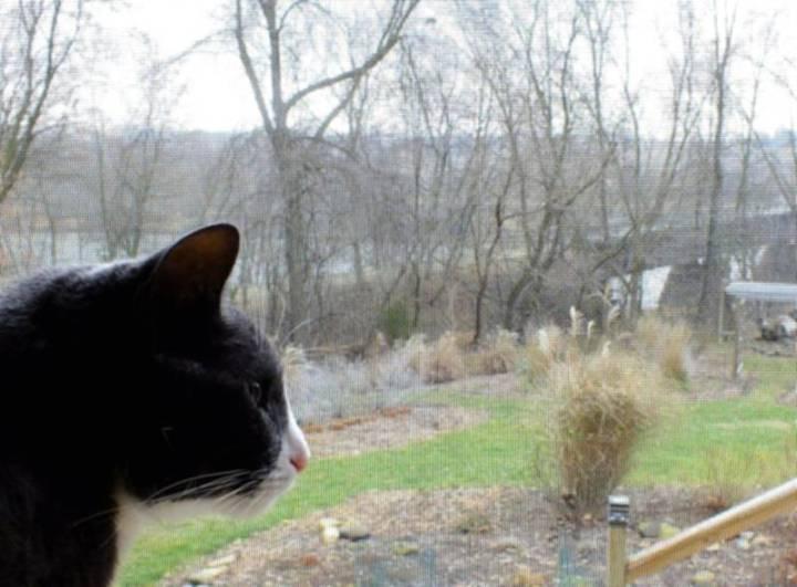 Murphy enjoying spring breezes in December.