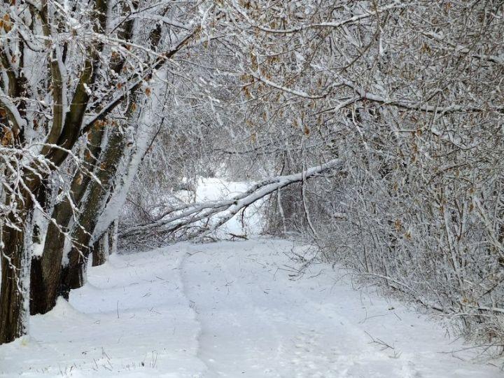 Blizzard, aftermath, birds 096