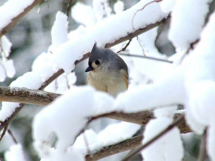 Blizzard, aftermath, birds 126