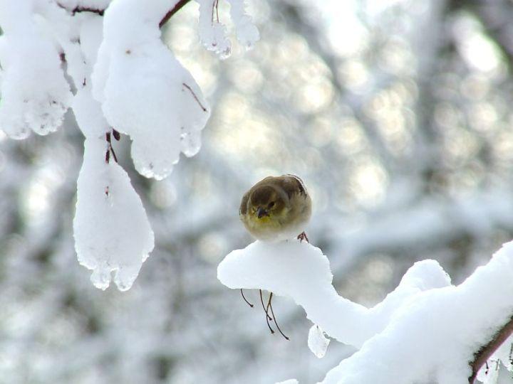 Blizzard, aftermath, birds 129