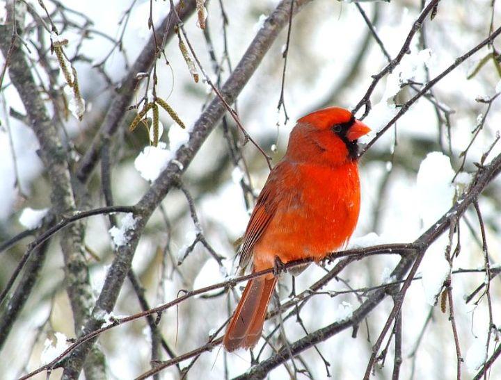Blizzard, aftermath, birds 136