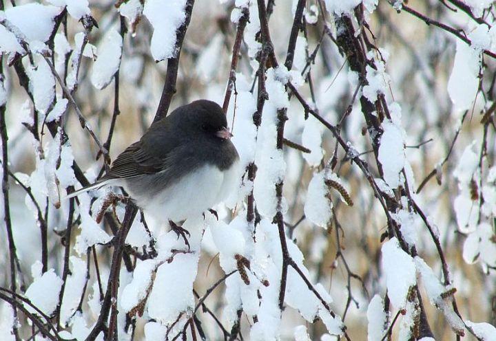 Blizzard, aftermath, birds 162