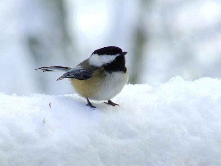 Blizzard, aftermath, birds 189