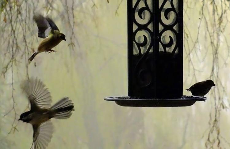 flurry of birds 107