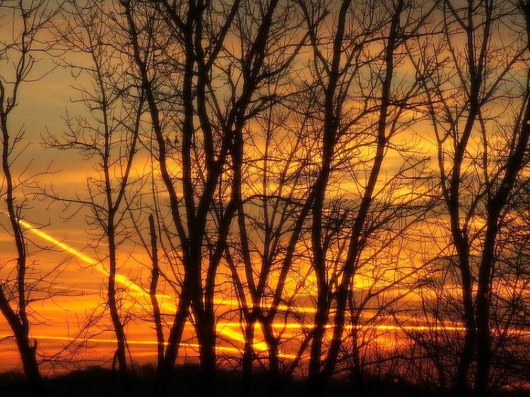 House,  Christmas tree, sunrise 070