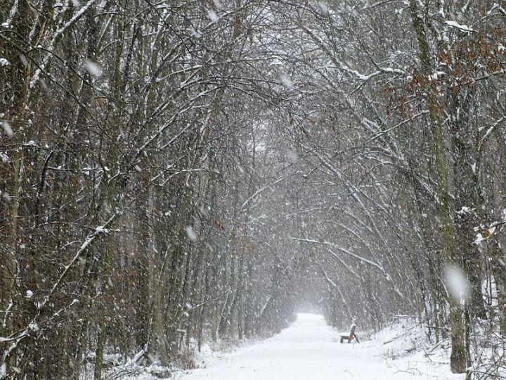 Snowstorm 059