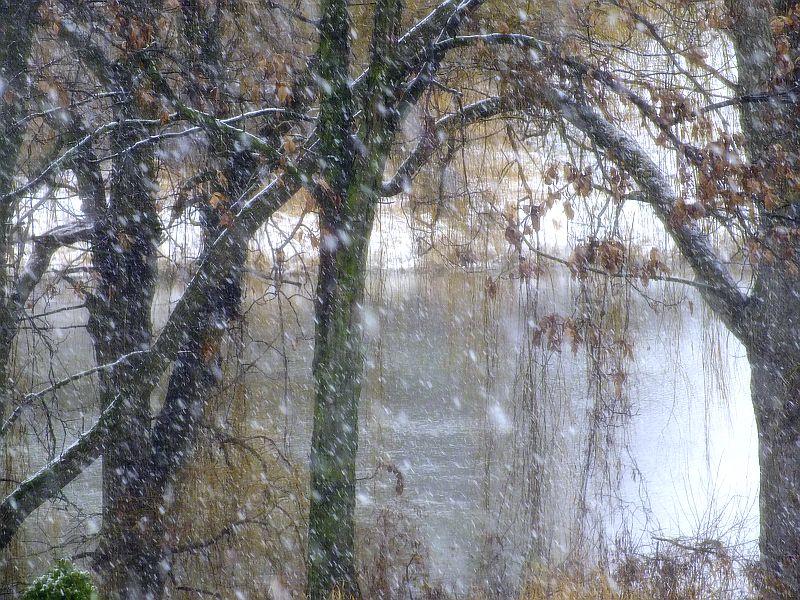 Snowy Sunday 044