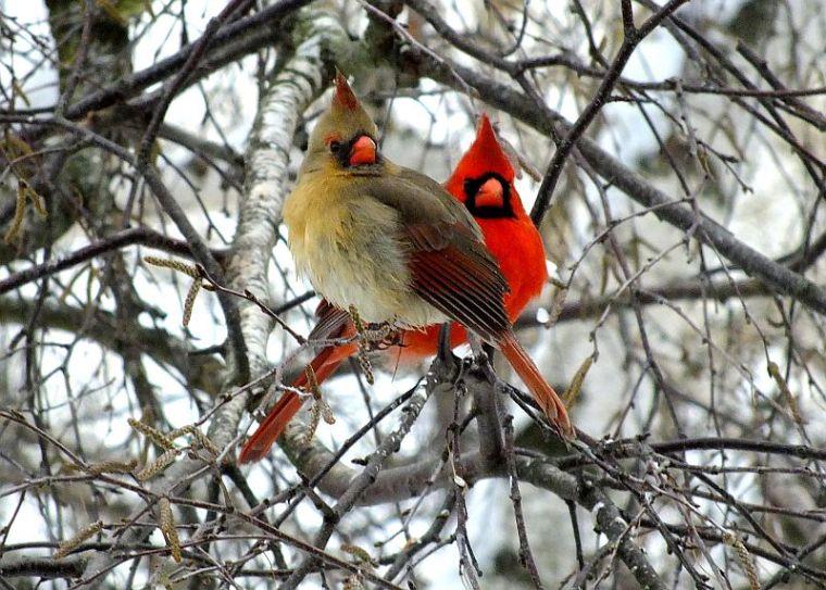 birds christmas break 010