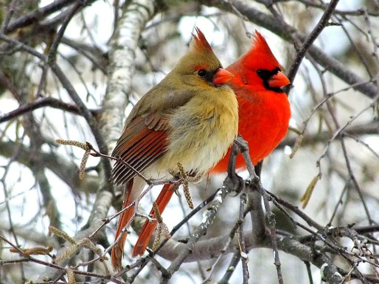 birds christmas break 011
