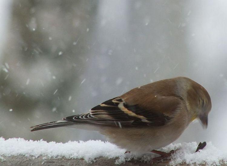 Birds snow rain fog 016