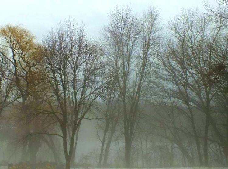 Birds snow rain fog 063