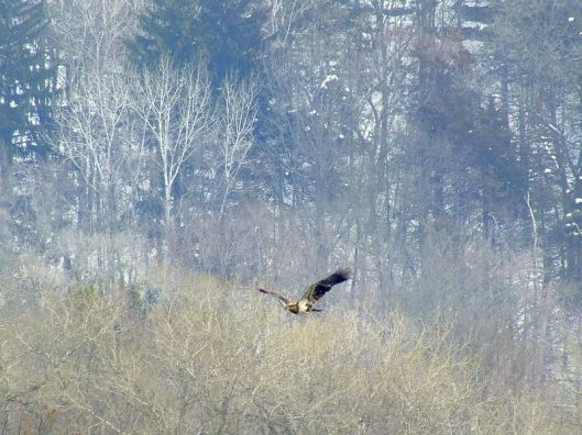 Eagles, Wollersheim, Murphy 033