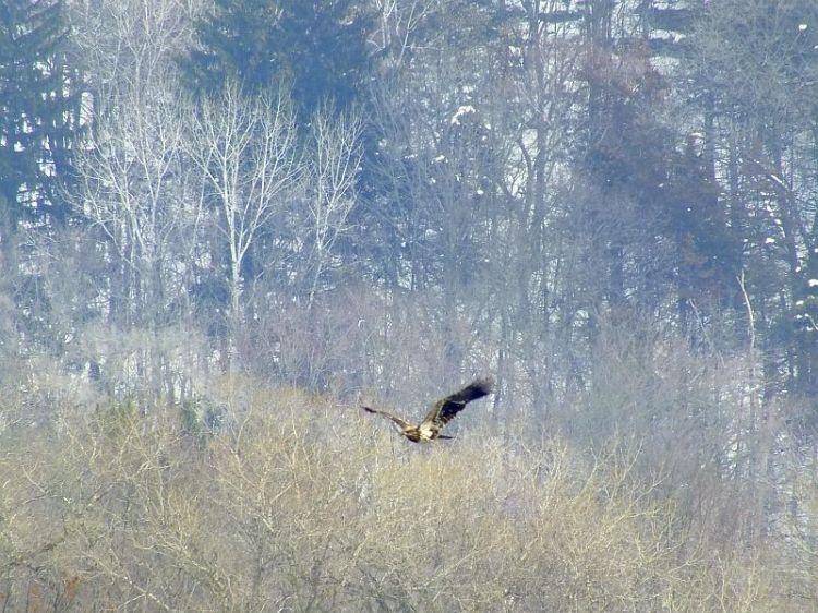 Eagles, Wollersheim, Murphy 033