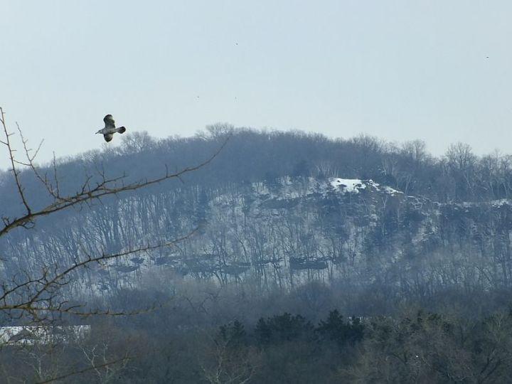 Eagles, Wollersheim, Murphy 057