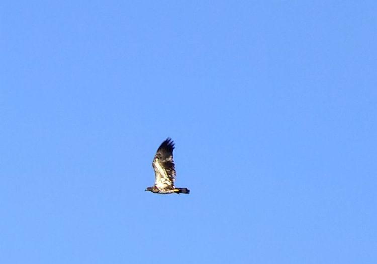 Eagles, Wollersheim, Murphy 083