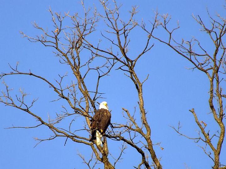 Eagles, Wollersheim, Murphy 099