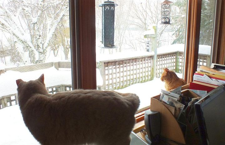 Mully and Fergus in the window 008