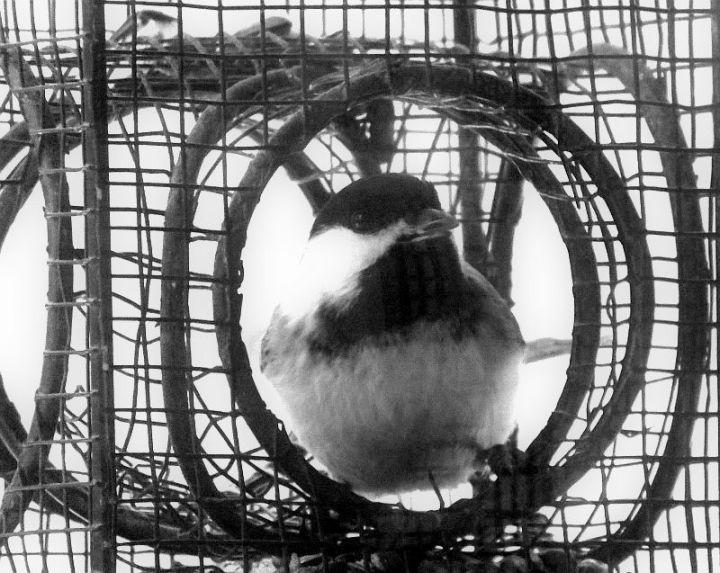 Snow, Murphy, House, Birds 053 - Copy
