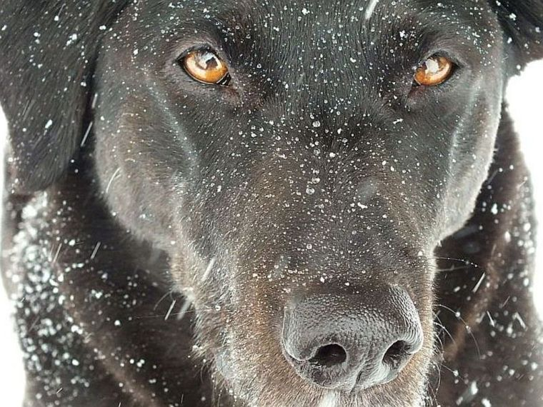 Snow-walk with Riley and Clancy 037 - Copy