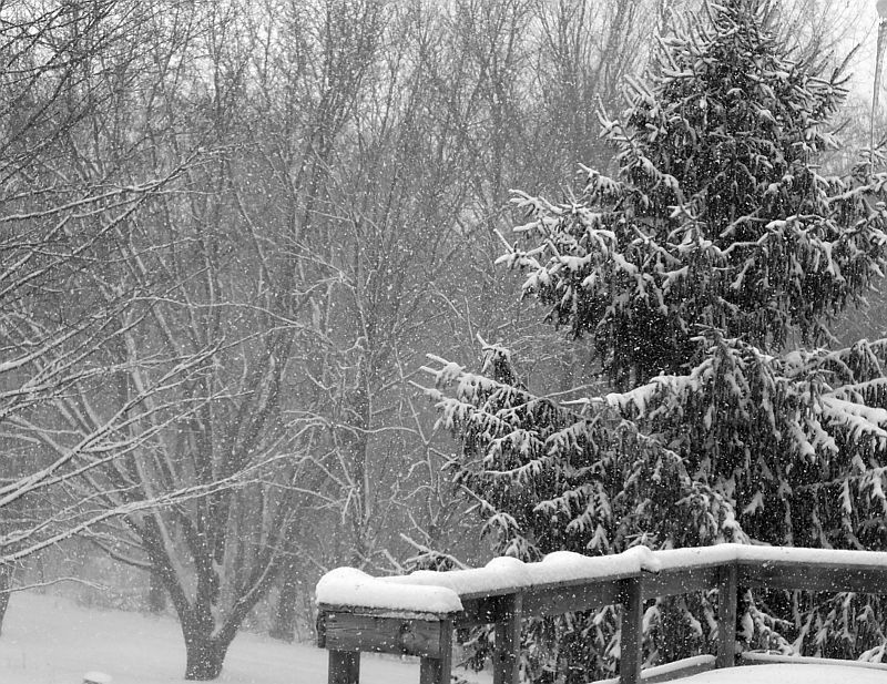 Titmice, snow, cats, chili, snow 013