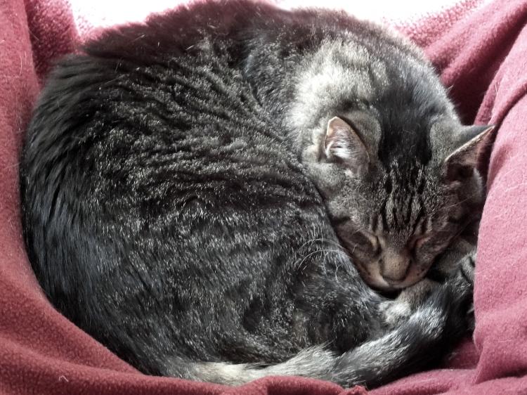 Cat Naps 003