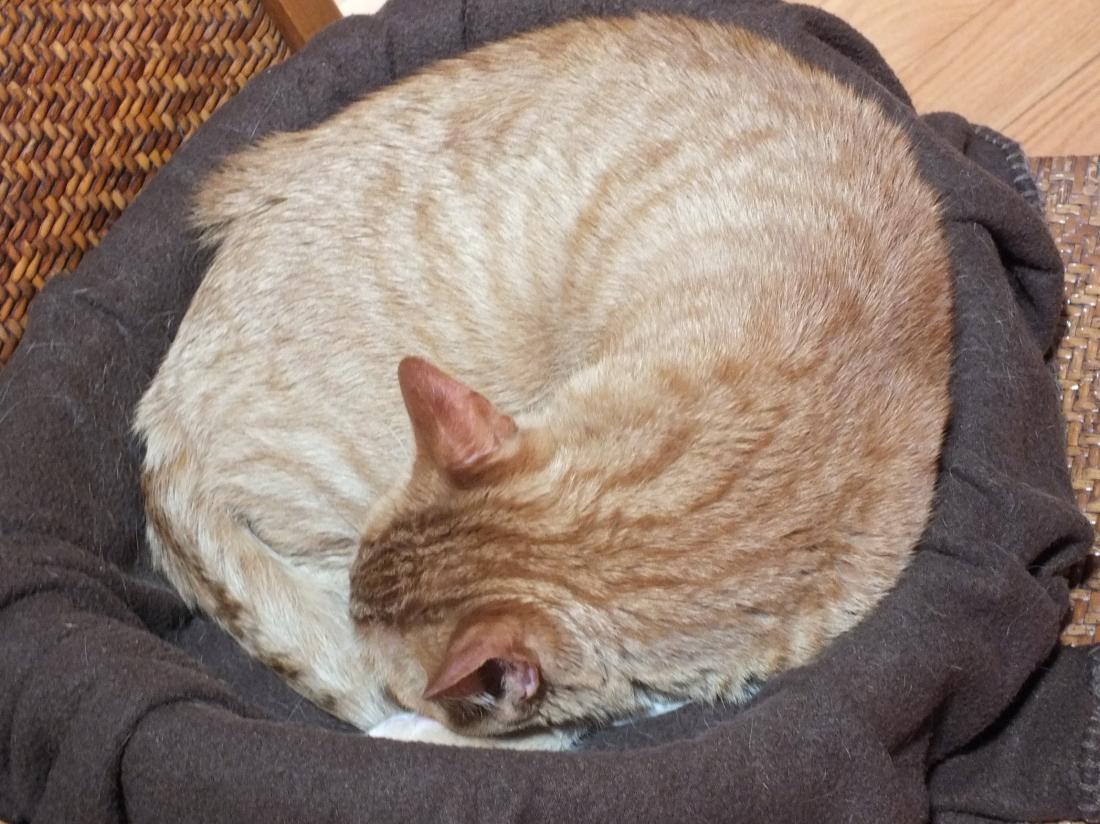 Cat Naps 012