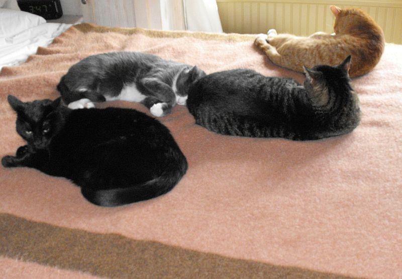 catz on bed 5.16.12 010