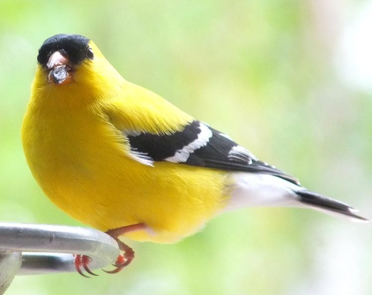 spring gardens, grated finger food, birds 013