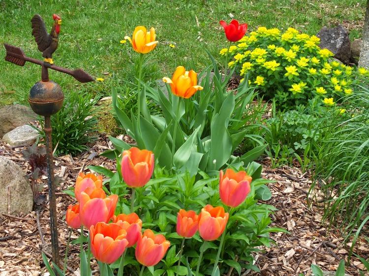 spring gardens, grated finger food, birds 081