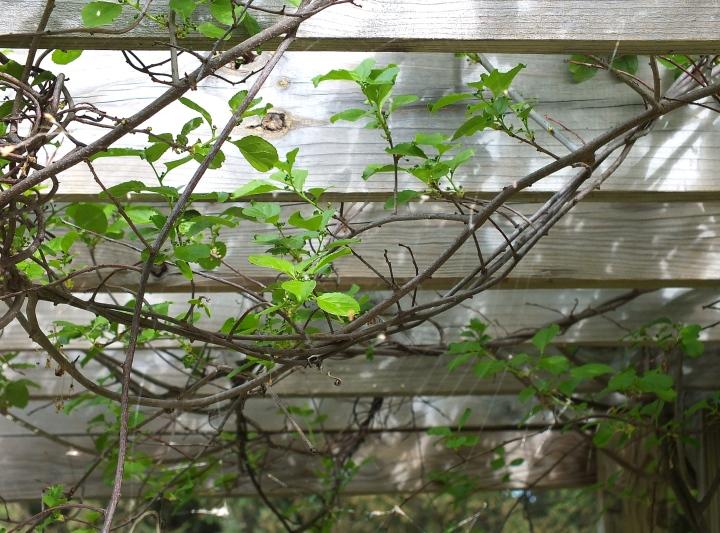 spring gardens, grated finger food, birds 090