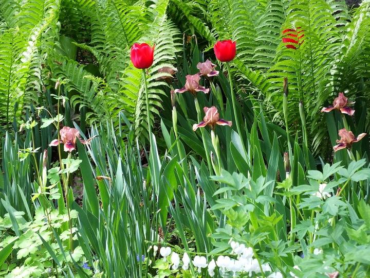 spring gardens, grated finger food, birds 097