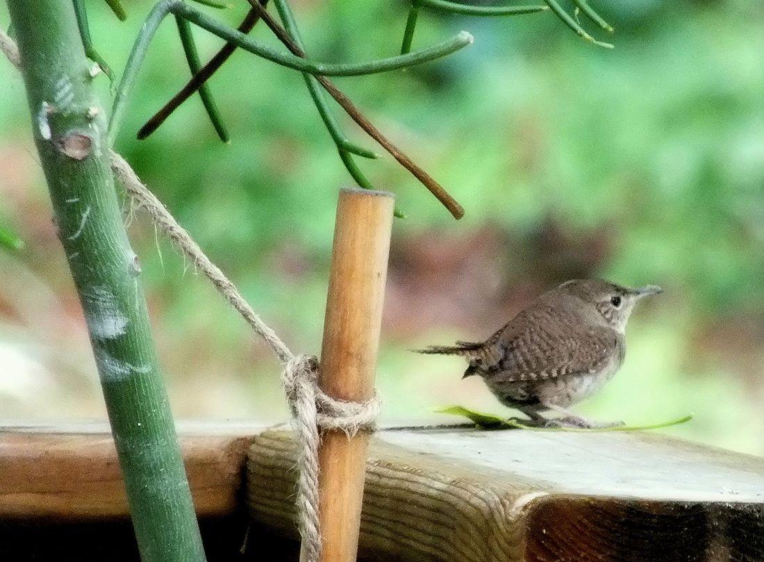 hummingbird, cardinal, lightning bugs 011