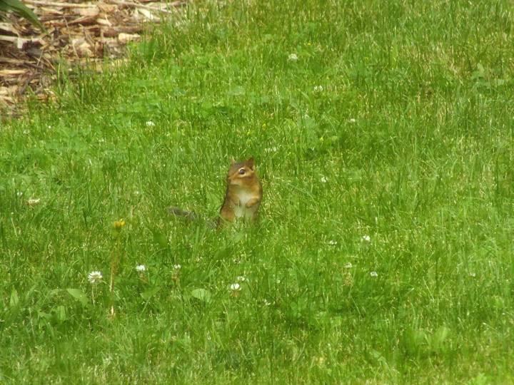hummingbird, cardinal, lightning bugs 028