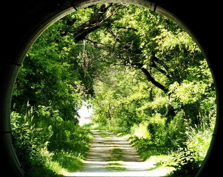 Turtle, bike ride, deer, gardens 136