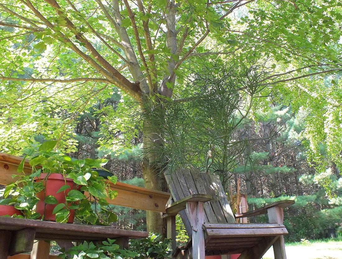 gardens 078