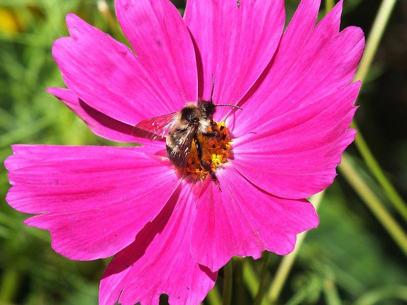 Birds, Bees, Butterflies, Tadpoles, Green Heron 068