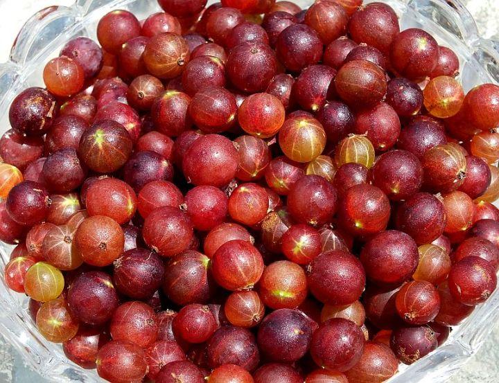 Gooseberries Galore 008