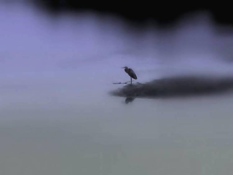 Heron Pensive