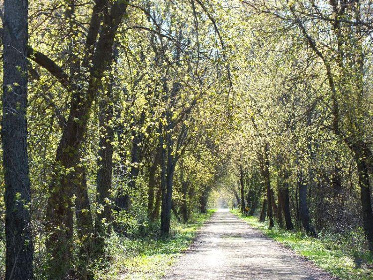 spring trail