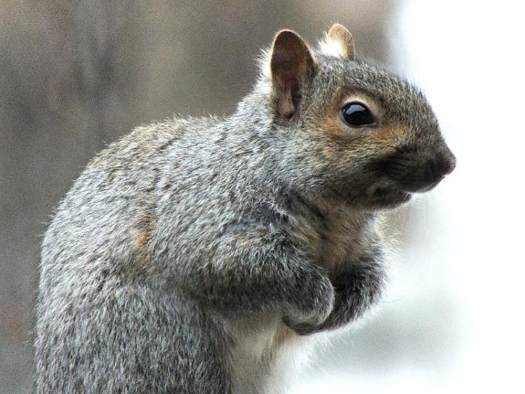 squirrel buddy3