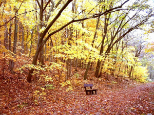 bench autumn babies picnic