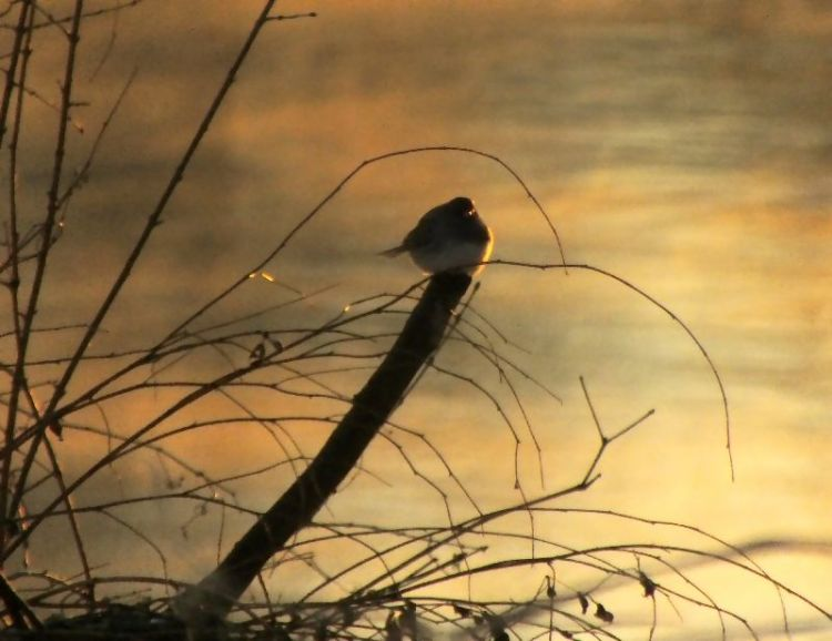 bird on riverbank